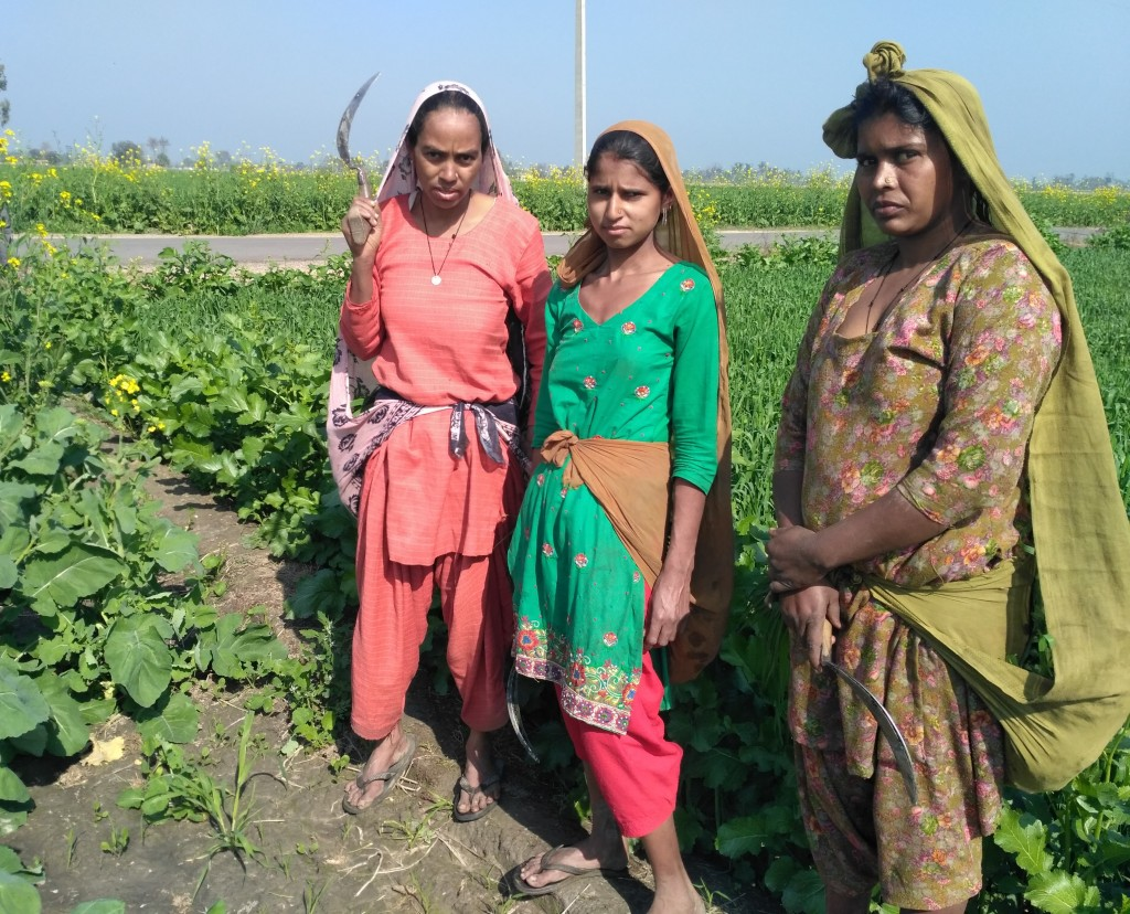 Dalit women working in the fields. Credit: Shailza Sharma